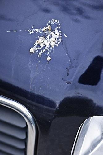鳥のフン 塗装への被害