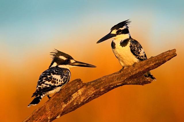 鳥のフンが車に与えるダメージ