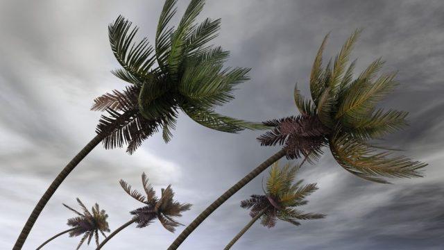台風が車に与える被害 木の樹液